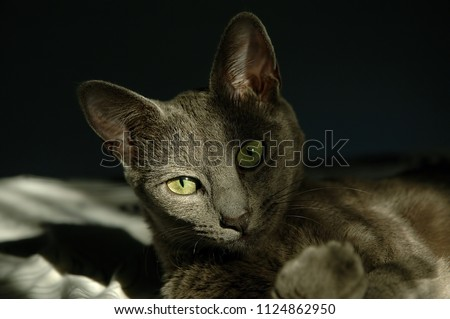 Adorable gray cat with green eyes lounging - close up face #1124862950