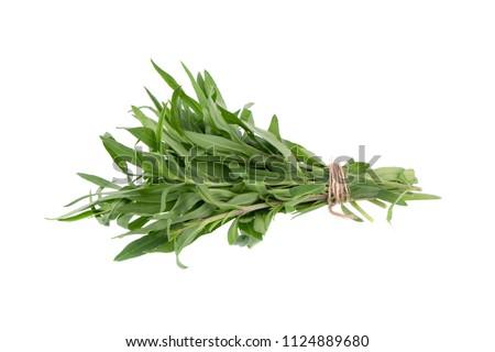 Fresh tarragon herbs, Tarragon herbs close up isolated on white background. #1124889680