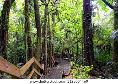 Lush green forest in Waikato, North Island, New Zealand #1125004469