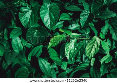 Dark green leaf in tropical jungle nature background #1125262340