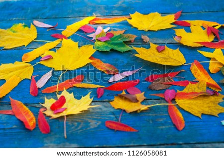 Colorful autumn leaves on blue scuffed boards. Maple leaves on a blue background as an autumn concept. #1126058081