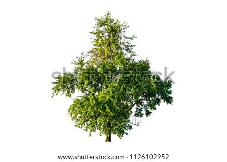 tree isolated on white background #1126102952