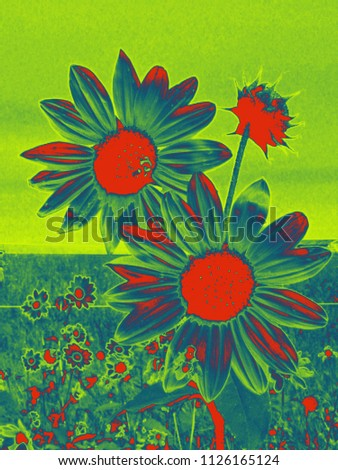Two sunflowers in a field of sunflowers are post-processed in a three color tone gradient.