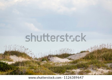 Grassy ridge of dune on Pea Island, a barrier island between Bodie and Hatteras Islands in the Outer Banks of North Carolina, USA, for coastal and environmental themes  #1126389647