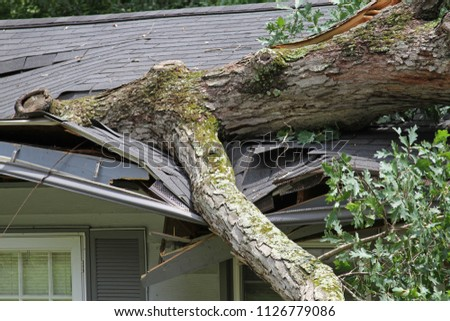 A storm causes a white oak tree to fall and rip through the roof of a house