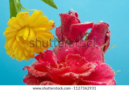 Three roses and a yellow flower under water with bubbles on a blue background. #1127362931
