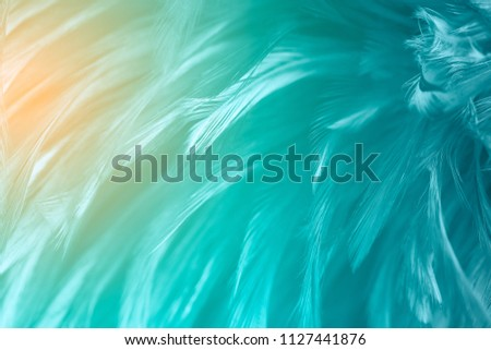 Green turquoise and blue color trends bird feather texture background,Light orange