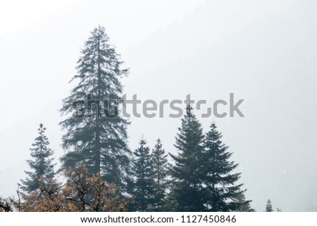 Beautiful tops of fir trees in the mountains. Autumn, leaves. Beautiful scenery #1127450846