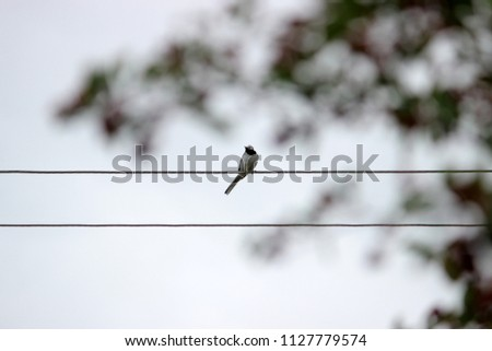 Silhuetts of a bird sitting on cords in the cloudy grey sky. Monochrome colors. Minimalism. Concept for card or interior picture, modern simple style, nature theme