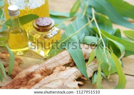 eucalyptus essential oil and eucalyptus #1127951510