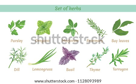 Set of herbs. Collection of vector icons in flat style on white background. Parsley, thyme, oregano, marjoram, dill, lemongrass, tarragon, bay leaves, basil,  rosemary. #1128093989