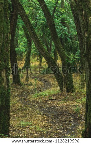Path through the forest #1128219596