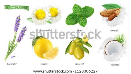 Medicinal plants and flavors, chamomile, mint, lavender, lemon, almonds, coconut, olive oil. 3d realistic vector icon set #1128306227