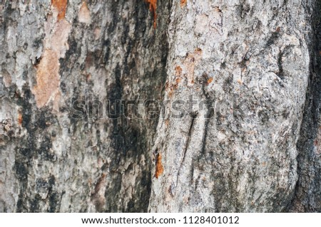 Tree bark texture for background #1128401012