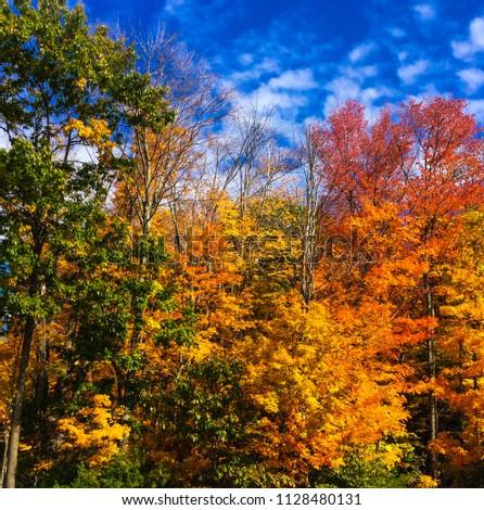 Colorful Massachusetts fall foliage  #1128480131