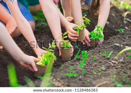 Children's hands planting young tree on black soil together as the world's concept of rescue #1128486383