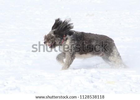 Mixed breed dog running through snow #1128538118