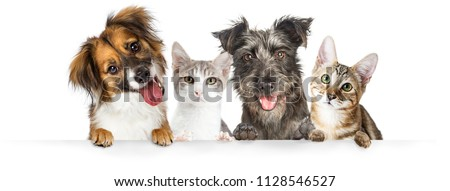 Cute dogs and cats together hanging paws over white horizontal website banner or social media header #1128546527
