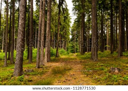 Summer forest in Czech Republic #1128771530