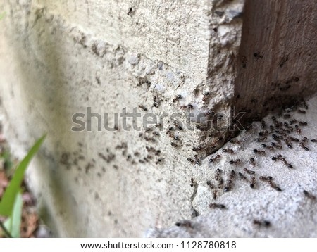 Colony of ants. A path of black ants. Ants in the garden of a private house Royalty-Free Stock Photo #1128780818