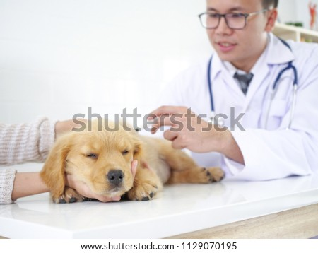 Puppy Golden Retriever meeting doctor at pet hospital for checking up body and get some vaccine. #1129070195