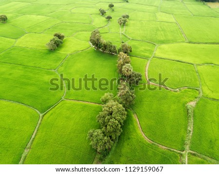 Green rice fields in the mekog delta Royalty-Free Stock Photo #1129159067