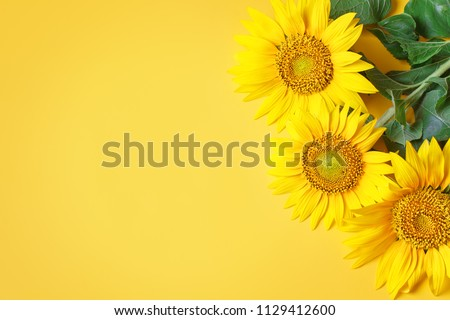 Beautiful sunflowers on yellow background.View from above. Background with copy space. #1129412600