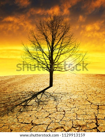 Dry country with cracked soil and barren tree at sunset. Global warming concept. #1129913159