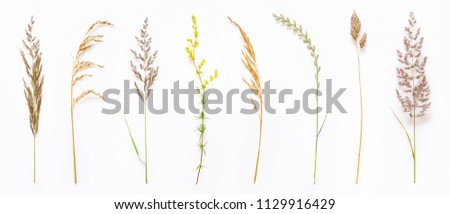 Set of wild ripe herbs grass and twigs, natural field plants, color floral elements, beautiful decorative floral composition isolated on white background, macro, flat lay, top view. #1129916429