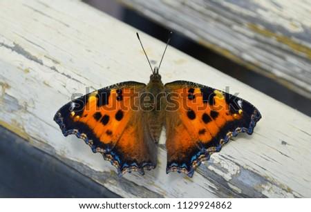 butterfly wings flight #1129924862
