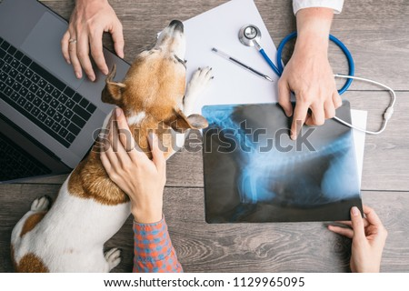 veterinary examination consultation with an X-ray. Dog and owners and doctors hands on the table with computer. #1129965095