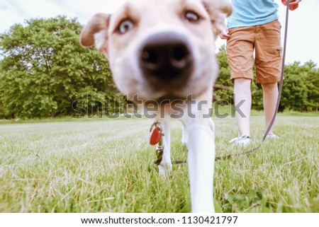 Burred image of a curious puppy walking close to the camera lens, dog's face is out of focus #1130421797