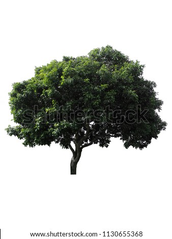 tree dicut at isolated on white background