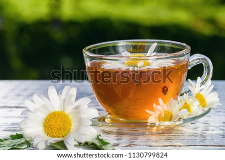 A cup of tea standing on a wooden, white table, in the flowers of the daisy field, to which the ladybug flew. #1130799824