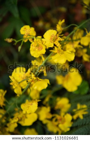 Yellow flower cluster #1131026681