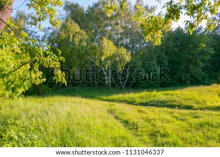 A picturesque forest path against the background of small flowering birches in the distance #1131046337