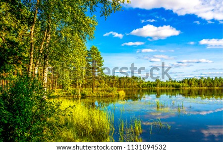 Forest lake shore landscape in sunny day. Summer forest lake shore panorama. Forest lake shore view #1131094532