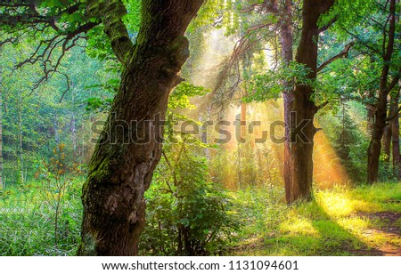 Morning forest sunlight shadows scene. Forest sunlight in morning landscape. Forest trees sunlight view #1131094601