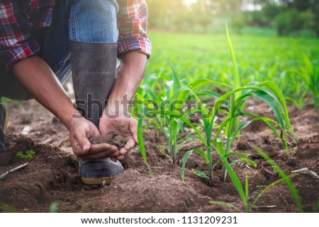 Young farmer holding pile of arable soil, male agronomist examining quality of fertile agricultural land, in cornfield. #1131209231