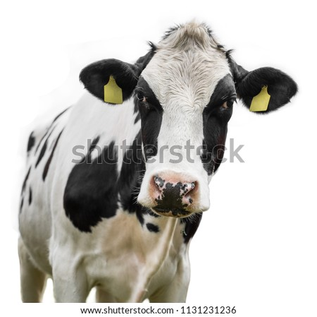 cow on a white background isolated #1131231236
