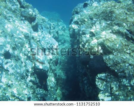 sea reefs underwater background unit isolate #1131752510