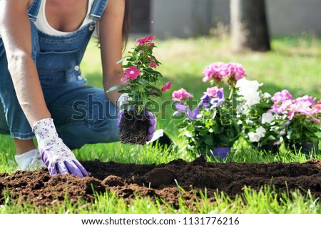 A beautiful woman in her garden, plant colorful flowers to give color. Concept of: gardening, spring, bio. #1131776216