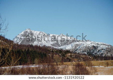 Scenic spring landscape of the forest and mountains with snowy peaks in Norway. Blue sky on sunny day #1131920522