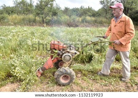Man mowing chamomile plantation with motocultivator or tractor #1132119923