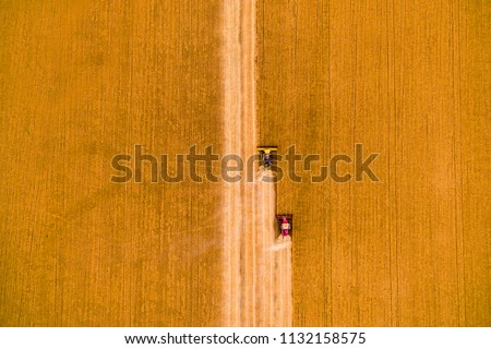 Harvesting of wheat in summer. Two red harvesters working in the field. Combine harvester agricultural machine collecting golden ripe wheat on the field. View from above. #1132158575