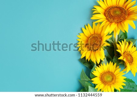 Beautiful sunflowers on blue background. View from above. Background with copy space. #1132444559