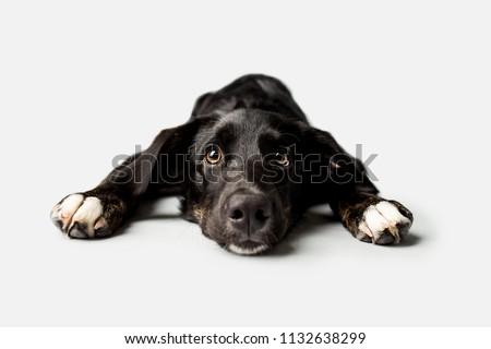 Sad puppy with puppy dog eyes #1132638299