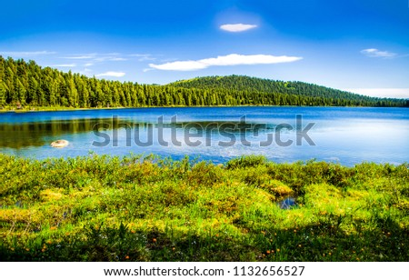 Forest lake summer landscape. Summer forest lake panorama. Forest lake shore view #1132656527