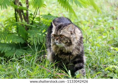 Brown cat in the garden #1133042426