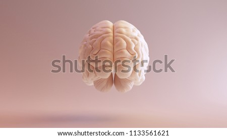 Human brain Anatomical Model 3d illustration